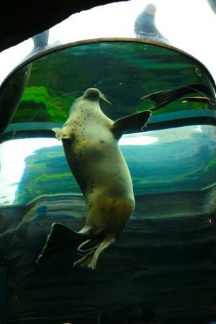 北海道 旭山動物園にて…